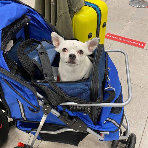 blog viaggi, mauro e cocò per il mondo, viaggiare con un cane,