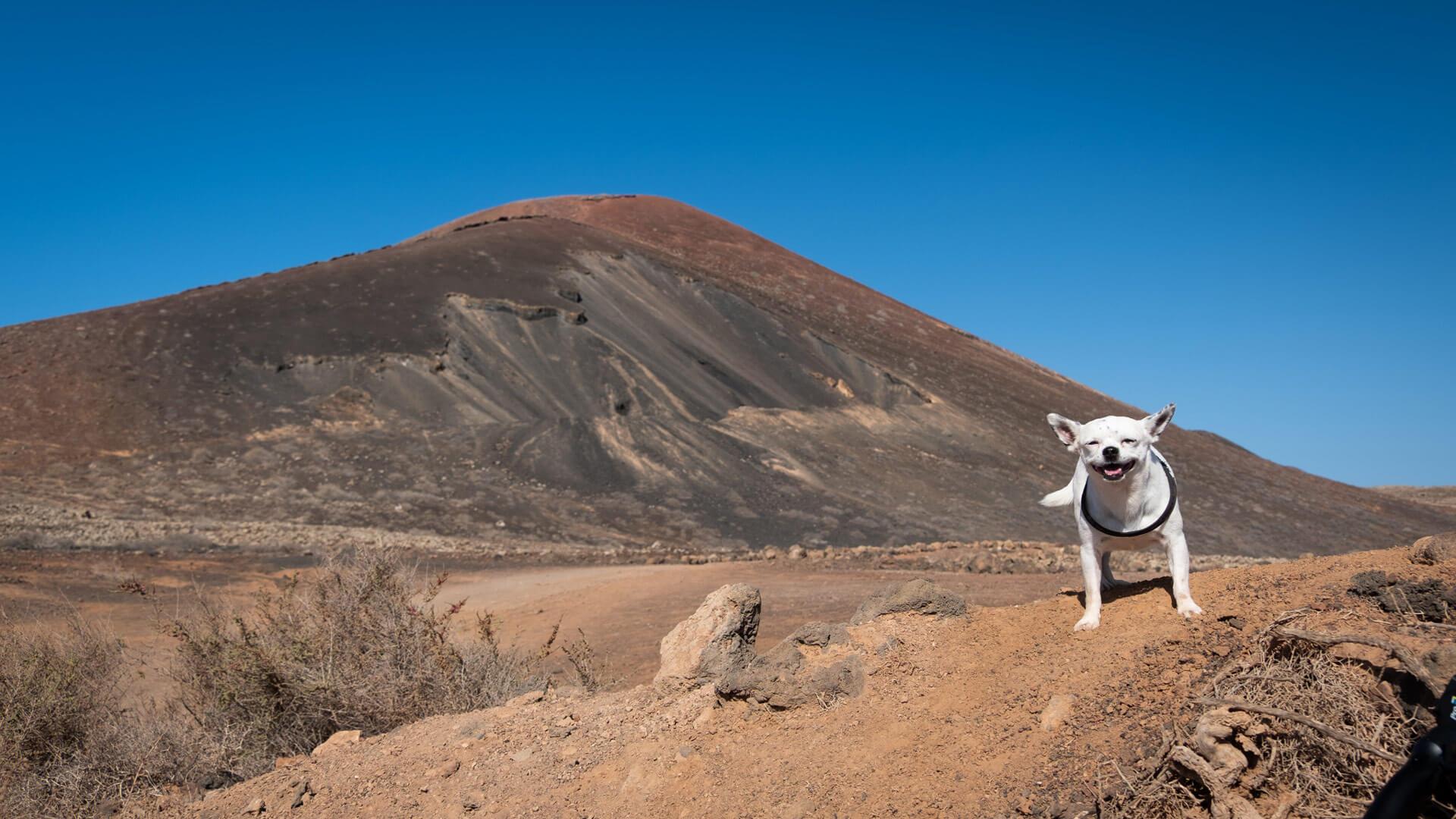 blog viaggi, mauro e cocò per il mondo, viaggiare con un cane, ,